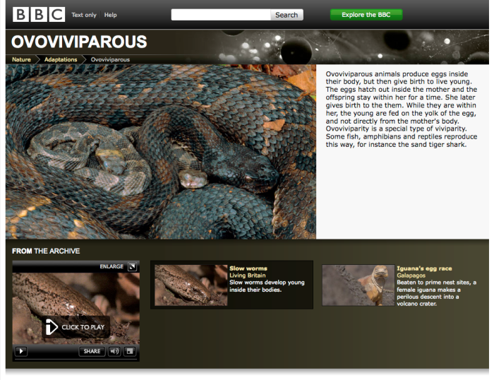 Ovoviviparous - what it is, what animals do it and BBC archived content about it